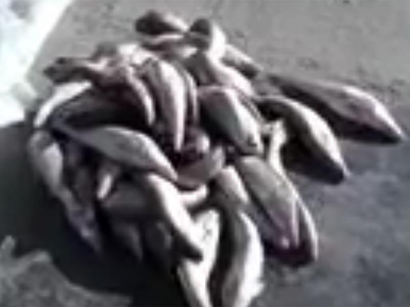 В Астраханской области пограничники задержали браконьеров-«удочников»