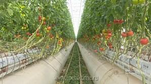 Липецкие аграрии акцент сделают на инновациях