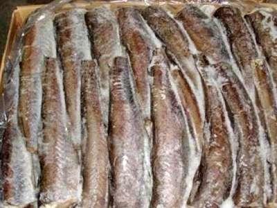 400 из 800 тонн выявленной пограничниками рыбы опасны для здоровья
