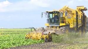 Урожай свеклы в регионе уже превысил прошлогодние показатели