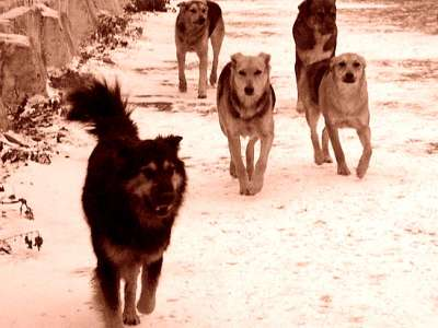 Жители Астраханской области голосуют «за» отстрел собак