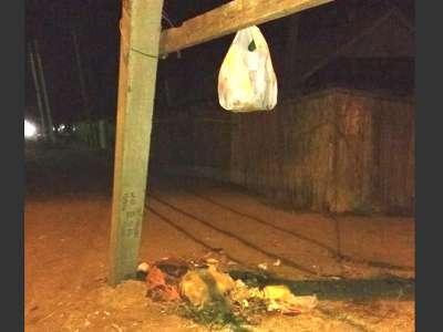 Бестарный способ вывоза мусора хорош для… животных